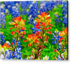 Wildflowers Acrylic Print by John Babis