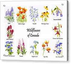 Wildflowers Of Canada Poster Acrylic Print by Sharon Freeman