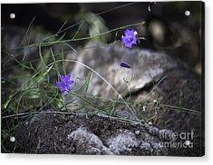 Wildflowers On Rocks Acrylic Print