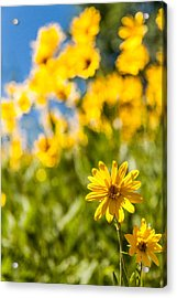 Wildflowers Standing Out Abstract Acrylic Print