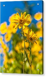 Wildflowers Standing Out Acrylic Print by Chad Dutson