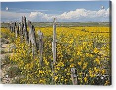 Wildflowers Surround Rustic Barb Wire Acrylic Print by David Ponton