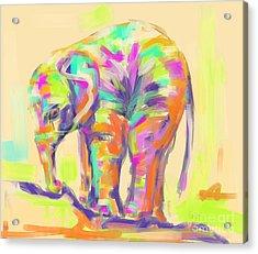 Wildlife Baby Elephant Acrylic Print