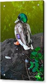 Wildlife In Central Park Acrylic Print