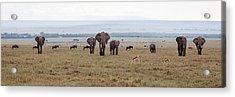 Wildlife On The Masai Mara - Kenya Acrylic Print