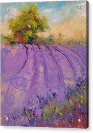 Wildrain Lavender Farm Acrylic Print
