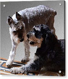 Will And Atticus Acrylic Print