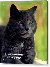 Will You Go Away Acrylic Print by Mike Flynn