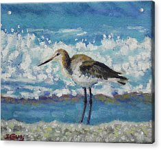 Willet Acrylic Print by Sharon Guy