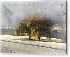 Willow Fog Acrylic Print by Cris Hayes