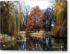 Acrylic Print featuring the photograph Willow Lake by Cassandra Buckley