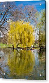 Willow Tree Water Reflection Acrylic Print by Matthias Hauser