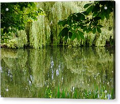 Willows Reflected Acrylic Print by Winifred Butler