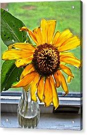 Wilting Sunflower In Window Acrylic Print by Greg Jackson