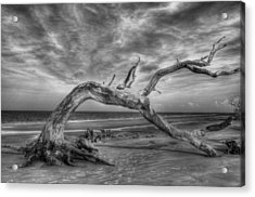 Wind Bent Driftwood Black And White Acrylic Print by Greg and Chrystal Mimbs