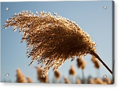 Acrylic Print featuring the photograph Wind Blown by David Stine