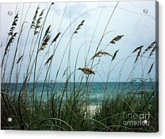 Acrylic Print featuring the photograph Wind Dancers by Megan Dirsa-DuBois