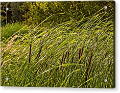 Wind In The Cattails Acrylic Print