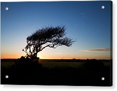 Wind Sculptured Hawthorn Tree, The Acrylic Print by Panoramic Images