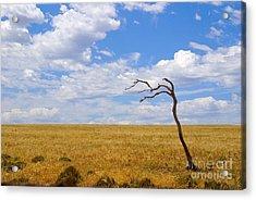 Wind Swept Acrylic Print by Serene Maisey