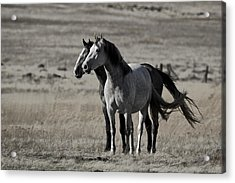 Acrylic Print featuring the photograph Windblown D3560 by Wes and Dotty Weber
