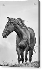 Windblown Horse Acrylic Print by Tracy Munson