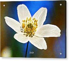 Windflower Whispers Acrylic Print by Nikki Marie Smith