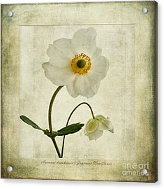 Windflowers Acrylic Print by John Edwards