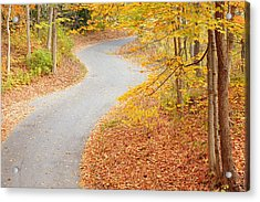 Winding Into Fall Acrylic Print by Alexey Stiop