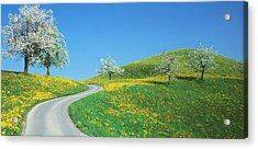 Winding Road Canton Switzerland Acrylic Print