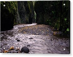 Winding Through Oneonta  Gorge Acrylic Print by Jeff Swan