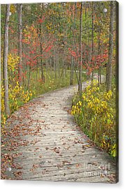Acrylic Print featuring the photograph Winding Woods Walk by Ann Horn