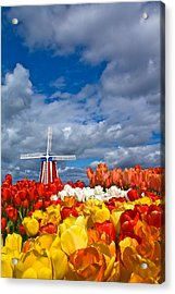 Windmill And Tulips Acrylic Print