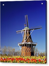 Windmill In A Tulip Field, De Zwaan Acrylic Print by Panoramic Images