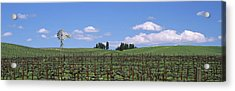 Windmill In A Vineyard, Napa County Acrylic Print by Panoramic Images