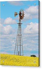 Windmill In Canola Field Acrylic Print