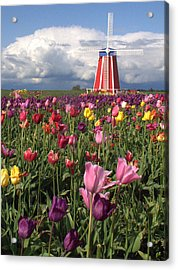 Windmill In The Tulips Acrylic Print