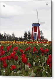 Windmill Red Tulips Acrylic Print by Athena Mckinzie