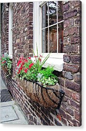 Window Box 3 Acrylic Print by Sarah-jane Laubscher