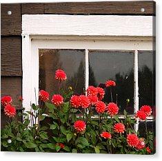 Acrylic Print featuring the photograph Window Box Delight by Jordan Blackstone