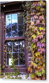 Window In Mayslake Ivy Acrylic Print