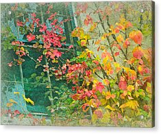 Window Of Autumn Acrylic Print by Lorella  Schoales
