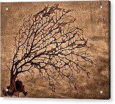 Windowpane Coral Acrylic Print by Carol Leigh
