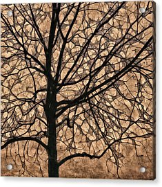 Windowpane Tree In Autumn Acrylic Print by Carol Leigh