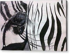 Windows I Zebra. Acrylic Print by Paula Steffensen
