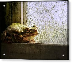 Windowsill Visitor Acrylic Print