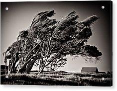 Windswept Acrylic Print