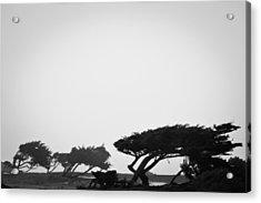 Windswept Shoreline Acrylic Print by Melinda Ledsome