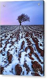 Windswept Tree Scotland Acrylic Print by John Farnan
