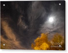 Windy Night Acrylic Print by Angela J Wright